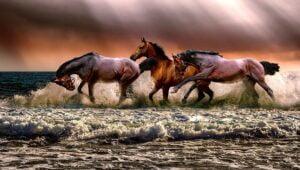 BM SPM Puisi Tradisional – Sang Gembala Kuda